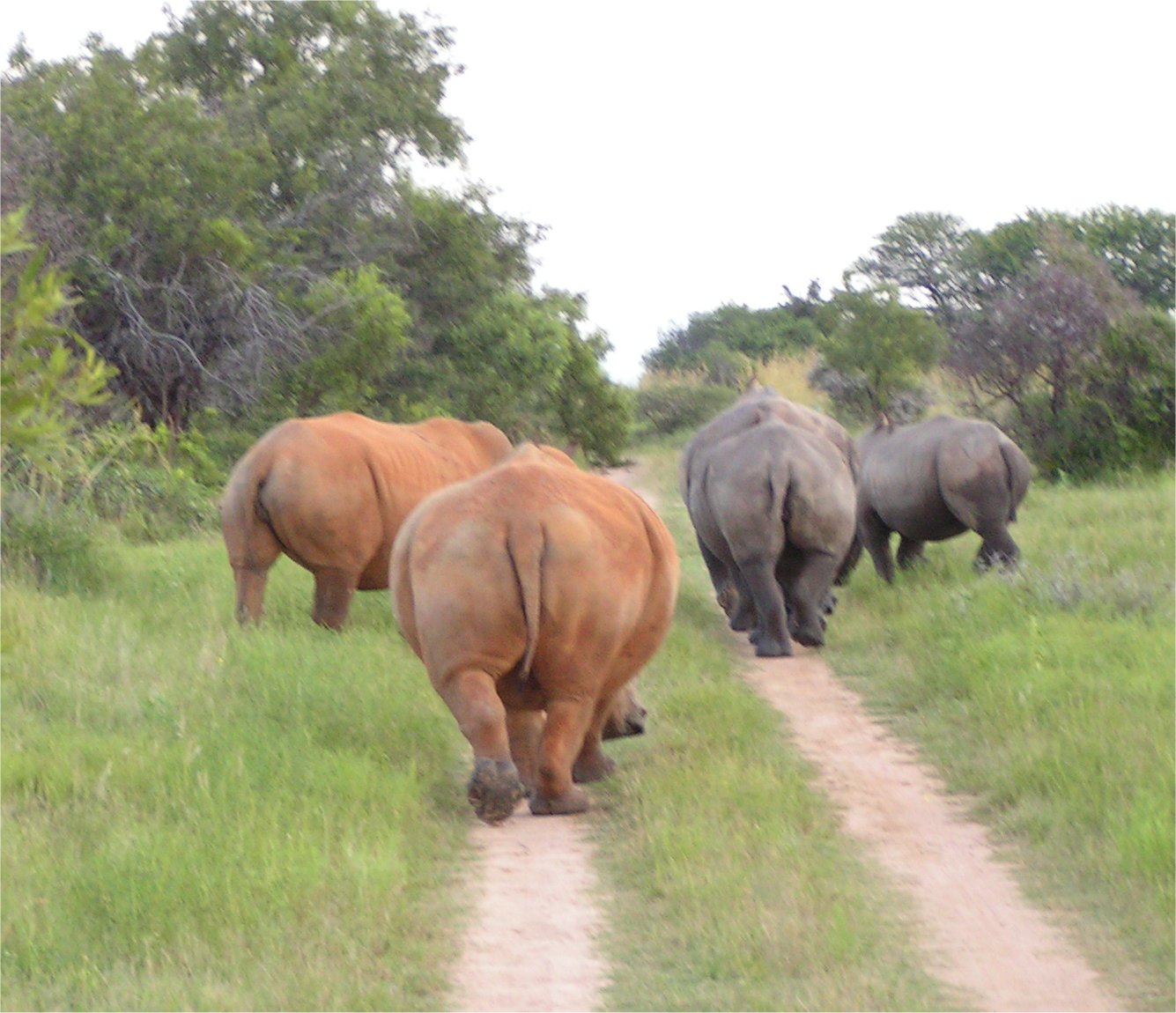 Pruritis ani the dreaded itchy butt dr leslie greenberg 39 s blog - Elephant assis ...